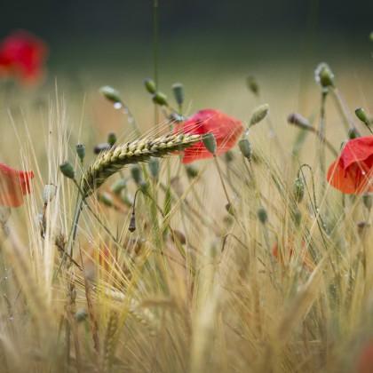 Summer feeling by Alsal Photgraphy