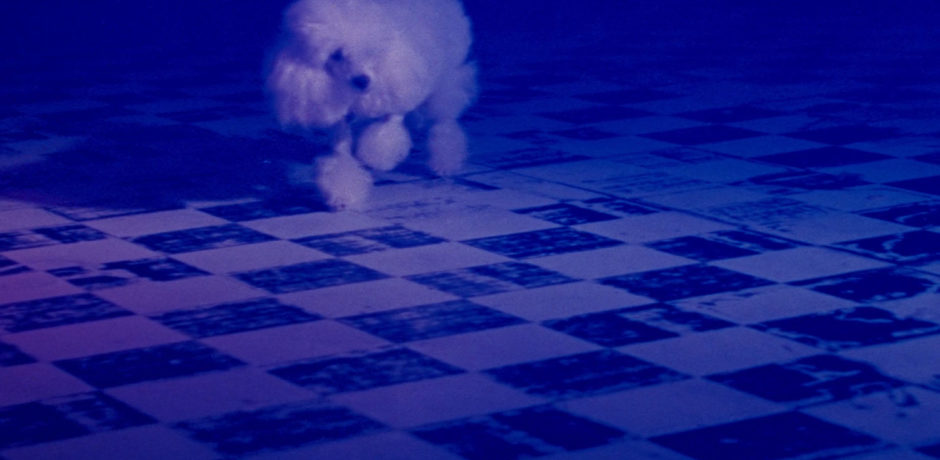 Poodle walking across a tiled floor